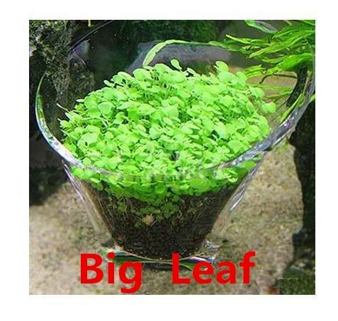 Aquarium Plant Grass Seed